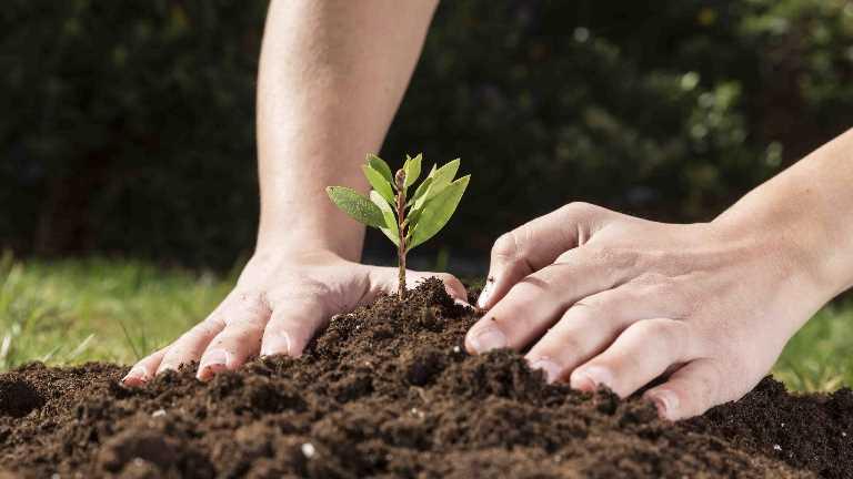İstanbul Gelişim Üniversitesi – 2020 Uluslararası Bitki Sağlığı Yılı İlan Edildi