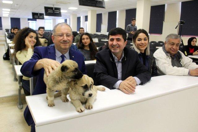 Yavru Köpekler Hukuk Dersinde